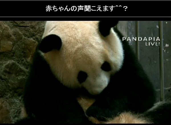 panda20150916-nconico