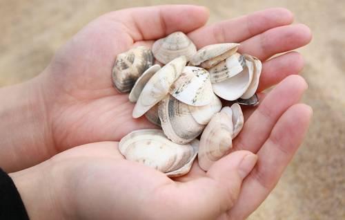 貯金箱の材料貝殻