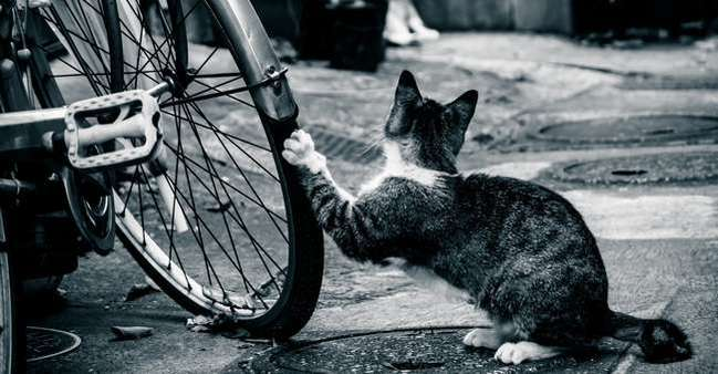 自転車も乗る前に安全点検を