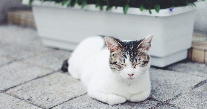 やる気がでない時は猫を見に行く
