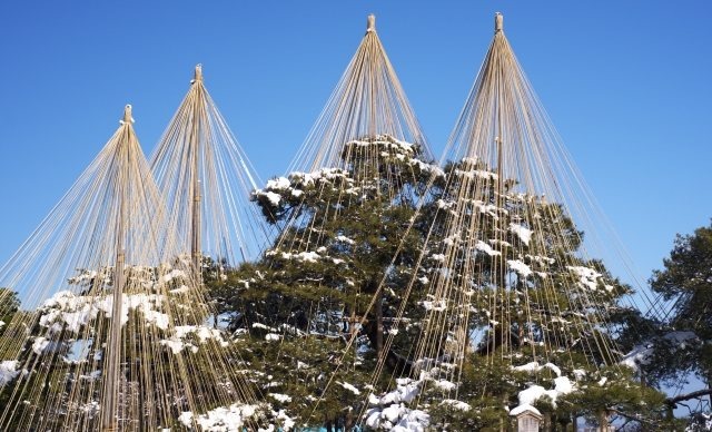 日本三大名園の兼六園の雪吊り