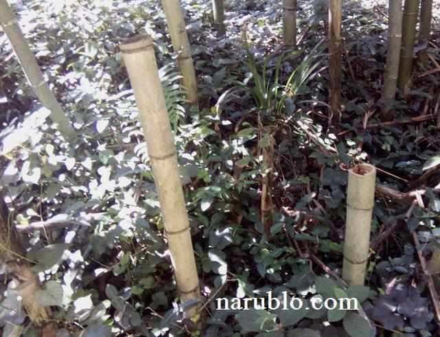 竹を1メートルほどで切ると負担が少ない