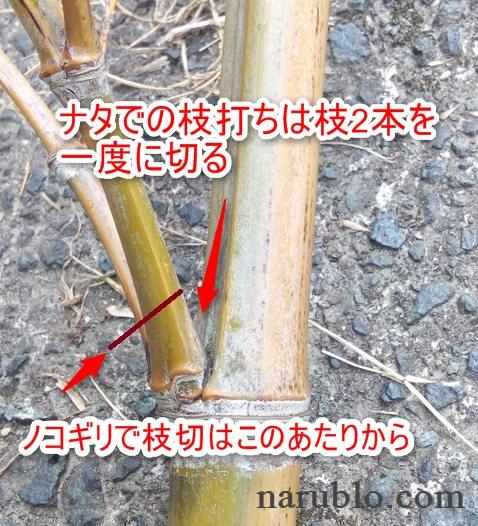 竹の枝打ち方法、鋸とナタでの切る位置