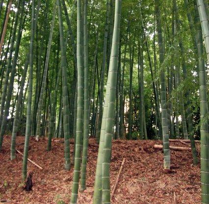 竹林の目安
