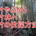 竹やぶから竹林へする時の竹の伐採方法