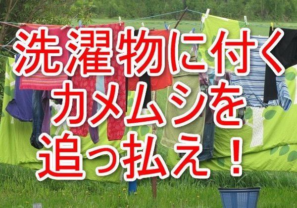 田舎暮らしは洗濯もものカメムシに注意